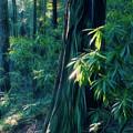 Sunshine In The Forest by Yulia Kazansky