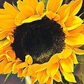 Sunshine On My Mind by Jessica Manelis