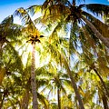 Sunshine Palms by Ethan Helferty