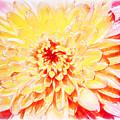 Sunshine by Sheryl Trunick
