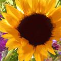 Sunshine Sunflower In The Garden by Elaine Plesser