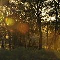 Sunspots by Diana Cannon