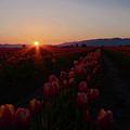 Sunstar by Nichole Peterson