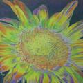 Sunverve by Cris Fulton