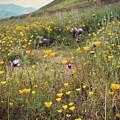 Super Bloom by Kiana Carr