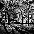 Super Contrasted Trees by David Resnikoff
