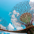 Super Tree Grove- Gardens By The Bay by Valley Arora
