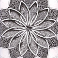 Superfactorial Flower by Geoffroy Dextraze