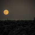 Supermoon  by Black Brook Photography