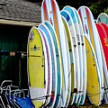 Surf Lessons by Alan Hart