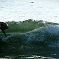 Surf by Stephanie Haertling