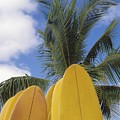 Surfboard Concession by Bob Abraham - Printscapes