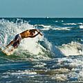 Surfboarding In Florida by Allan Einhorn