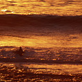 Surfing California by Soli Deo Gloria Wilderness And Wildlife Photography