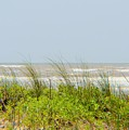 Surfside Dunes by Cynthia Bailey