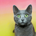 Surprised Cat by Sheila Fitzgerald