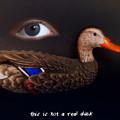 Surreal Duck by Ludmila SHUMILOVA