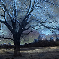 Surreal Fantasy Fairytale Blue Starry Trees Landscape - Fantasy Nature Trees Starlit Night Wall Art by Kathy Fornal