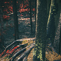 Surreal Red Leaves In A Dark Forest Finland by Sandra Rugina