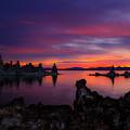 Surreal Sunrise by Renee Sullivan