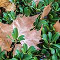 Surrounded Leaf by Robert VanDerWal