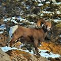 Surverying The Jasper Landscape by Adam Jewell