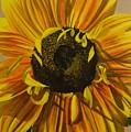 Susanna's Sunflower by Amelia Emery