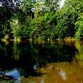 Suwannee River by Greg Patzer