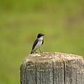 Swallow On A Stump by Linda Kerkau