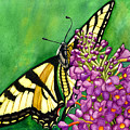 Swallowtail 1 by Catherine G McElroy