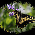 Swallowtail Butterfly 2 With Swirly Framing by Carol Groenen