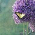 Swallowtail Butterfly In The Garden by Kim Hojnacki