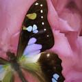 Swallowtail Dreams by Janet Fikar