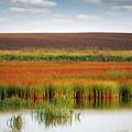Swamp And Field Landscape Autumn Season by Goce Risteski