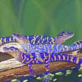 Swamp Babies by Tracy L Teeter