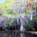 Swamp Colors by Lana Trussell