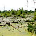Swamp Habitat by Corey Ford