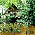 Swamp Hut In Honduras by Trude Janssen