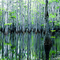 Swamp In Louisiana by Ester  Rogers