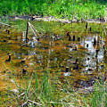 Swamp by James Richmond