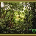 Swamp L A With Decorative Ornate Printed Frame. by Gert J Rheeders