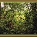 Swamp L B With Decorative Ornate Printed Frame. by Gert J Rheeders