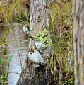 Swamp Monster by Bob Phillips