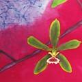 Swamp Orchi Fine Art Batik by Kay Shaffer