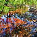 Swamp Pallet by Alan Metzger