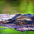 Swamp Patrol by Mark Andrew Thomas