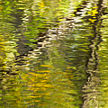 Swamp Reflections Abstract by Bill Chambers