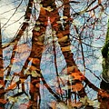 Swamp Reflections by Beth Ferris Sale