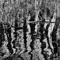 Swamp Reflections by Jonathan Garrett