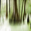 Swamp by Scott Pellegrin